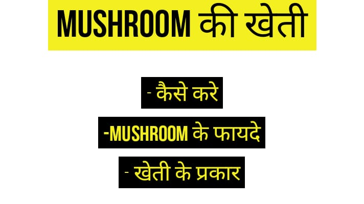 mushroom ki kheti in hindi